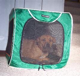 Roxie in crate