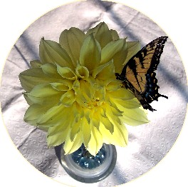 Photo of Dahlia on pin frog with butterfly