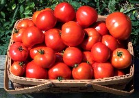 Photo of Tomato basket