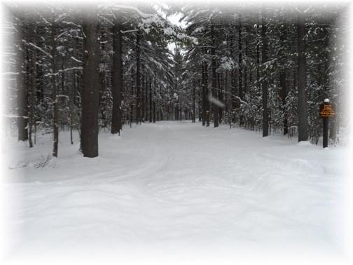 Trail in Adirondack Park 3/22/13