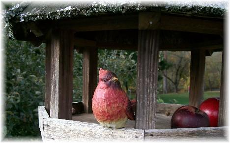 Apple Barn cardinal in Pigeon Forge TN 10/29/10