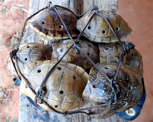 Cherokee turtle shell rattles 7/12/13