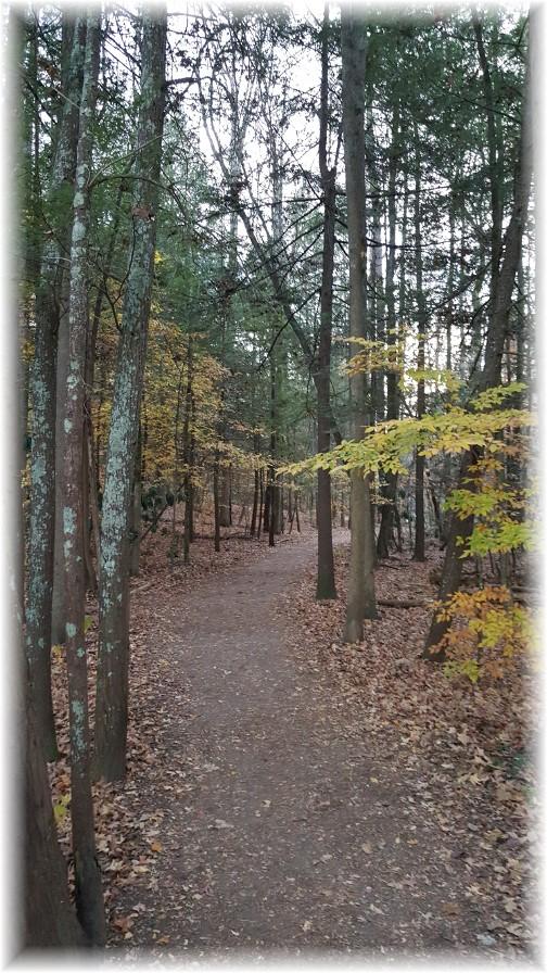 Smoky Mountain park trail 11/22/16