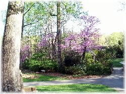Park in Greensboro NC