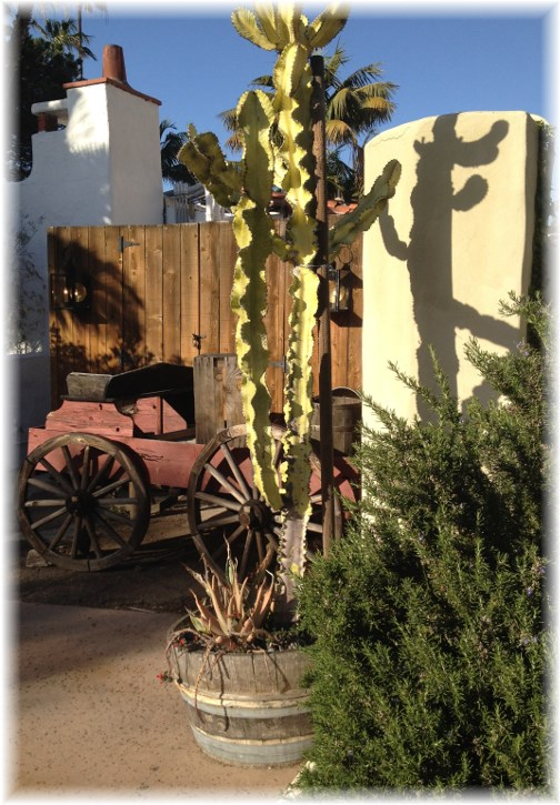 Old Town cactus (Click to enlarge)