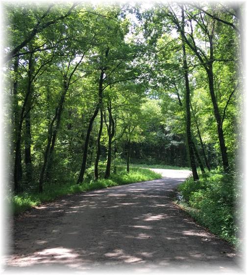 Ozark National Forest road, Natural Dam, AR 8/6/17