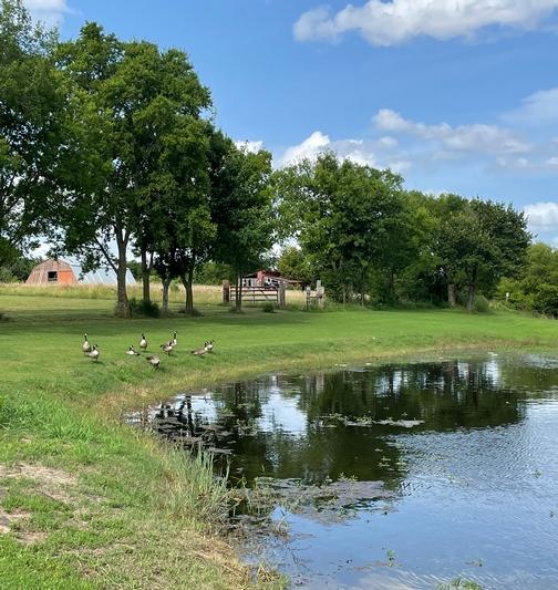 Pond from Brooksyne's childhood