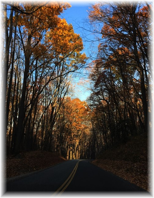 Road in Smoky Mountain National Park 11/22/16