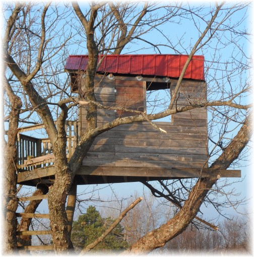 Treehouse in New York