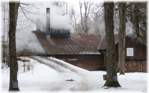 Yancey's sugarbush shanty boiling sap