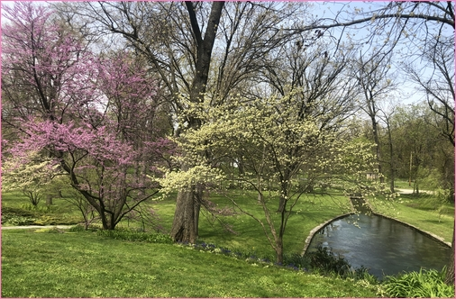 Blooming dogwoods at Donegal Springs