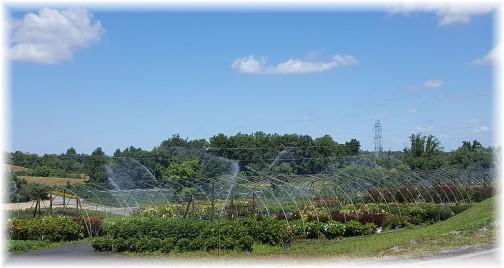 Eaton Farms 9/7/16