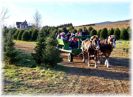 Elizabeth Farms Christmas trees, Lancaster County, PA