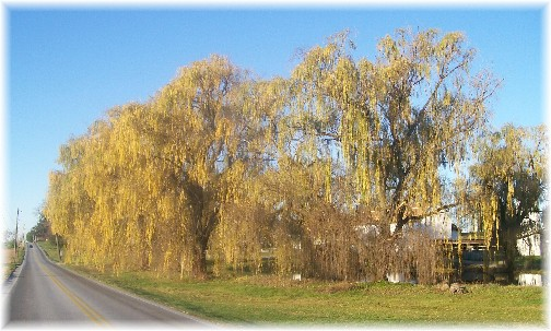 Willows on Rockvale Road, Lancaster PA 12/1/11