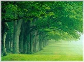 Foggy tree line