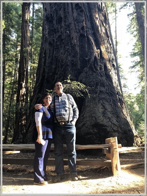Giant redwood tree 10/20/18