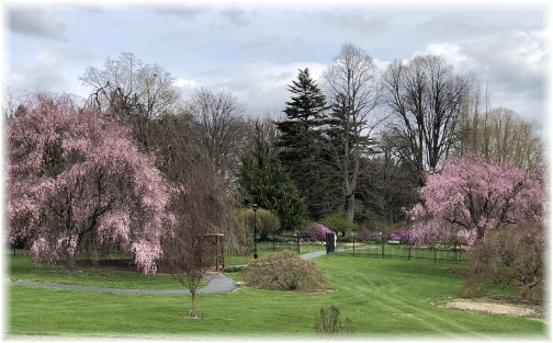 Hershey Gardens trees 4/24/18 (Click to enlarge)