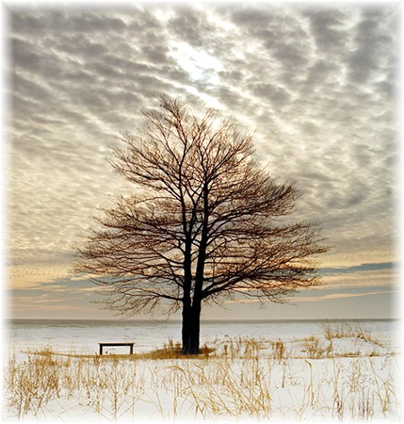 Tree in Michigan (photo by Howard Blichsfeldt)