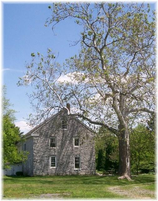 Sycamore tree with 1774 stone farmhouse