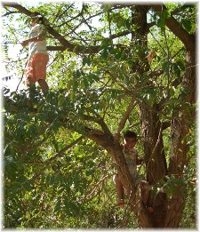 Photo of kids climbing a tree