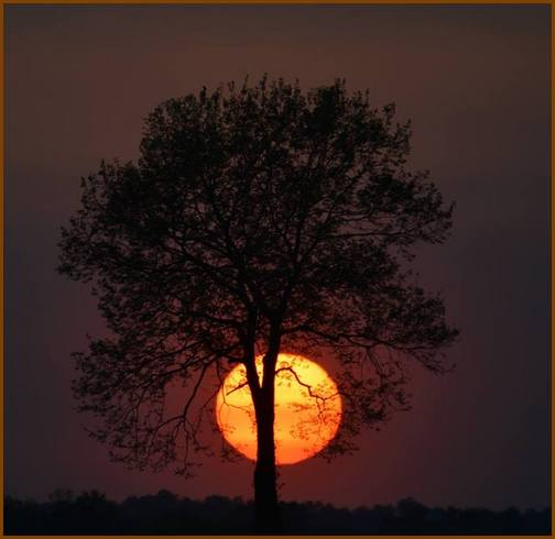 Tree (photo by Doug Maxwell)