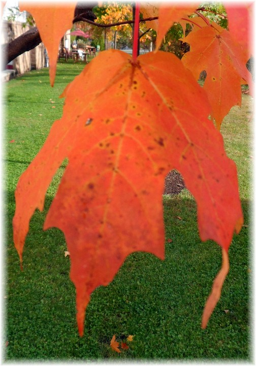 Leaf from Vermont