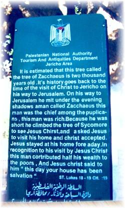 Zacchaeus tree plaque