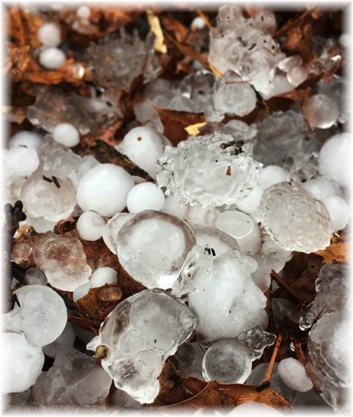 "Hail ""snow"" up close 2/25/17"