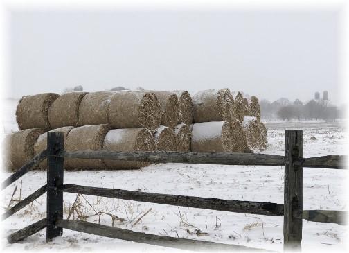 Hay in snow 1/4/18
