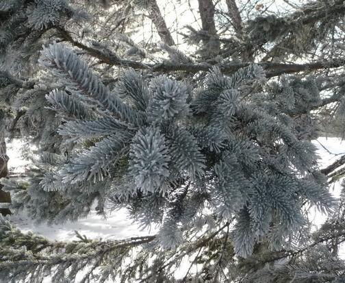 Hoar frost (Jeff Worrall)