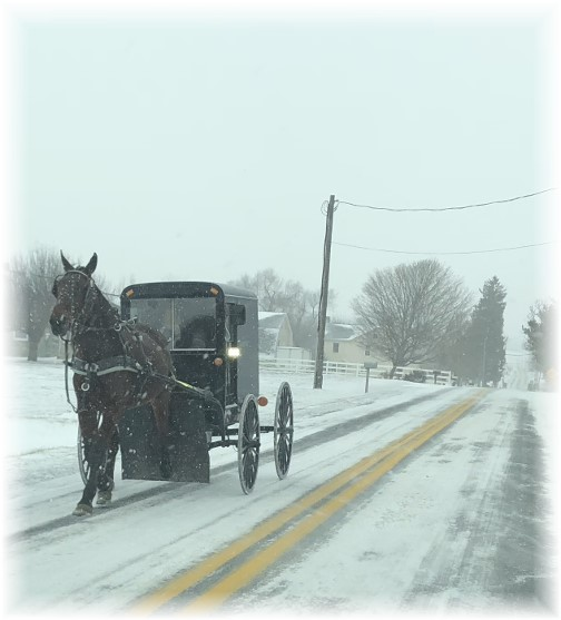 Horse and buggy in snow 1/4/18
