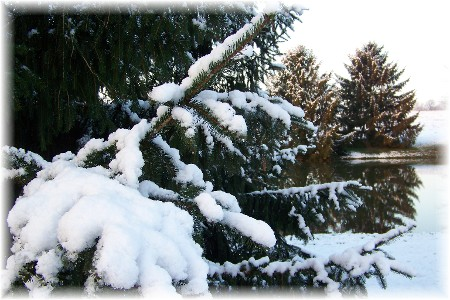 Martin pond in winter 12/6/09