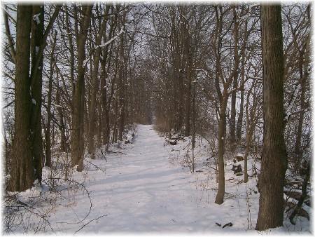 Snowy trail 2/3/10