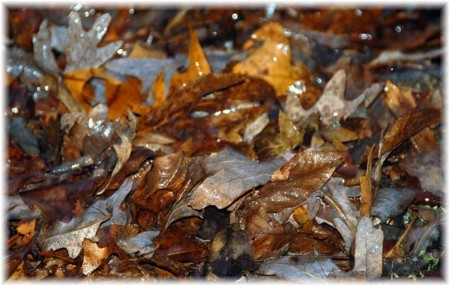 Winter leaves (photo by Doris High)